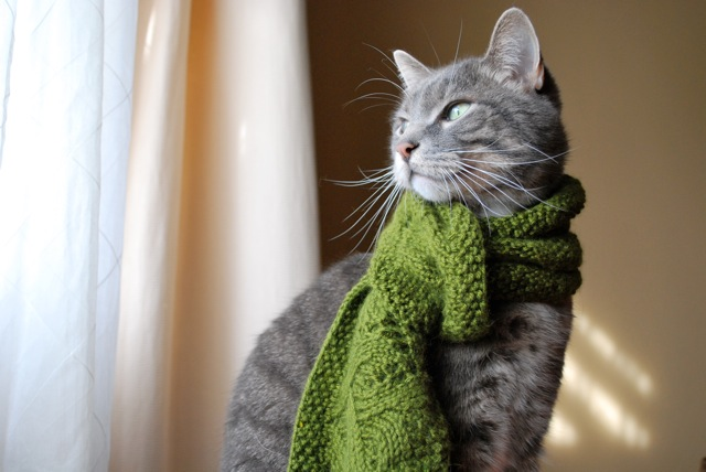 Knitting Project - A cool green ruffled scarf - Knitting Patterns ...